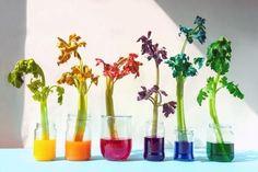 Experiment: Pflanzen färben - [GEO]