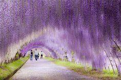 japaneese flower garden