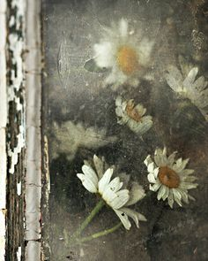 Floral Still Life Daisies Emotive Decay Yellow White by FrameOnYou, $20.00
