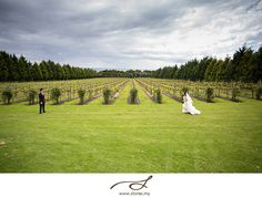 Our venue is blessed with Vineyards & Bay-views. Location: Morning Star Estate Photo: Stories by Integrity http://stories.my/