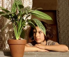 Mathilda and Leon's plant