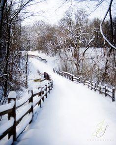Winter Photograph 8x10 Snowy Path on Metallic Paper