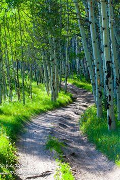 lianakar42:Bending Trail from John Kyler DigitalColorado onFivehundredpx