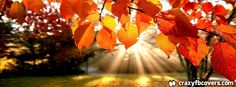 Autumn Leaves Sunray Facebook Cover - Facebook Timeline Cover Photo - Fb Cover