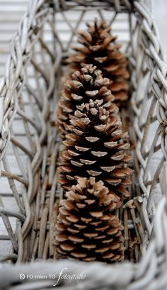 Pinecones; I wish Mom's long bread roll basket hadn't disintegrated. it would have made the best pinecone display with added greenery. .....b