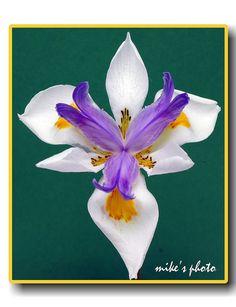 Unique flower by vienna1931