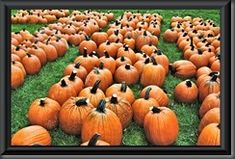 A Quality Time post for Our World Tuesday Pigeon Roost Farm National Rd SW Hebron, Ohio 43025 Pumpkin Fest is open. Johnny Appleseed, National Road, Quality Time, Pigeon, Pumpkin, Ohio, Favorite Things, Blog, Travel