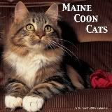 "Maine coon-This looks like William ""Waffle""...my current MC kitty"