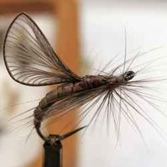 Ask any fly fisherman to see his fly box and it is likely to be loaded with a ton of different flies for different applications. I have four fly...