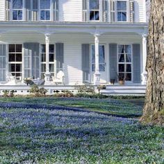 Welcome visitors with a carpet of flowers this spring by planting a mass of bulbs with grass-like foliage in your lawn. Early-spring bloomers like scilla siberica bulbs will be ready to mow when your turf perks up. | Photo: Karen Bussolini | thisoldhouse.com