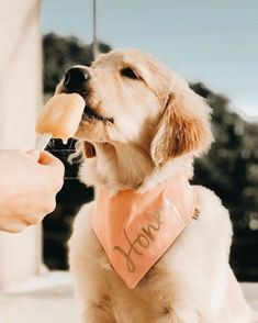 Dog And Puppies Diy Dog Photography Dog Pictures.Dog And Puppies Diy Dog Photography Dog Pictures Cute Dogs And Puppies, Baby Dogs, Doggies, Cute Baby Animals, Animals And Pets, Cat Anime, Dog Wallpaper, Irish Setter, Jolie Photo