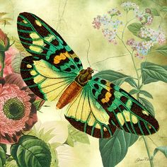Butterfly Visions-a Digital Art  - Butterfly Visions-a Fine Art Print