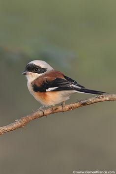 #birdwatcher