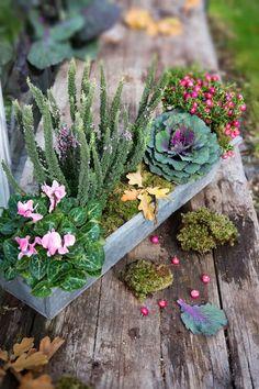 Syysistutukset ruukussa   Meillä kotona Garden Accessories, Garden Inspiration, Garden Ideas, Container Gardening, Succulents, Planters, Home And Garden, Skyline, Flowers