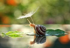It's All Goo Under the Umbrella ... A Magical Miniature World Of Snails By Vyacheslav Mishchenko