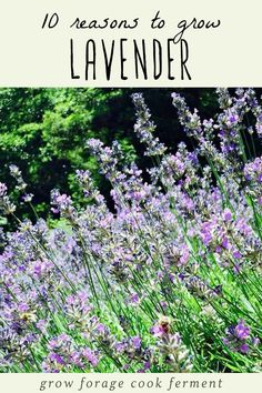 Lavender is a great