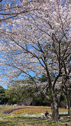 Beppu Park by tomosang R32m, via Flickr #oita #beppu Kumamoto, Kyushu, Beppu, Kagoshima, Oita, Outdoor Curtains, Nagasaki, I Want To Travel, Fukuoka