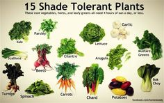 Shade tolerant vegetables