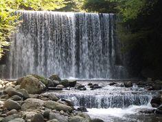 Japan Creek
