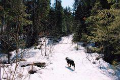 trail blazer // seek + scout
