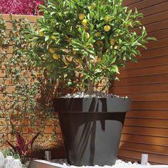 Monaco, Planter Pots, Beautiful, Flowers, Garden Ideas, Party, Houses, Nantes, Beautiful Pictures