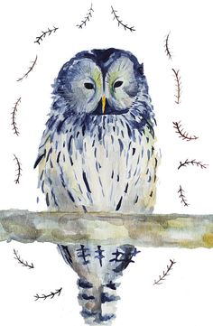 owl watercolor painting /  bird art / archival print of original by claire whitehead