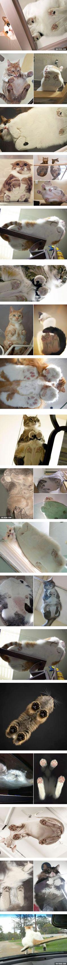 Cats vs Glass