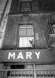 Jill Freedman (US) • « Mary » • New York City • 1981 >www.jillfreedman.com