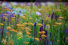 Achillea terracotta with Salvia. Steppe Plantings Late June to Early July 2015 | Nigel Dunnett
