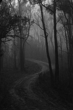 Foggy day in Adelaide Lee Hopkins Photography - Wald Gothic Aesthetic, Slytherin Aesthetic, Dark Fantasy Art, Dark Art, Photographie Portrait Inspiration, Forest Photography, Eerie Photography, Black Aesthetic Wallpaper, Black And White Aesthetic