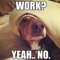 Animals are the best entertainment in the World, which make us laugh anytime, anywhere! Just look ridiculous animal picdump of the day 74 if you love funny animals. So ridiculous, funny and cute 27 funny animal pics! Funny Quotes, Funny Memes, Hilarious, Funny Sarcasm, Funny Animal Pictures, Funny Animals, Most Famous Memes, Oui Oui, Dog Memes