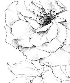 Rose Art Sketch New York flower clipart line drawing Flower Line Drawings, Flower Sketches, Art Sketches, Art Drawings, Rose Sketch, Art Floral, Floral Artwork, Botanical Drawings, Botanical Prints
