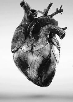 heart beat love black and white heart anatomy