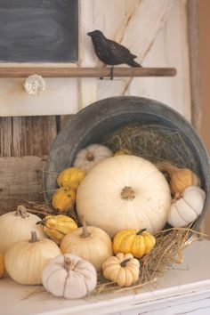 Autumn is Here  Pumpkins in the cornfields Gold among the brown Leaves of rust and scarlet Trembling slowly down Birds that travel southward Lovely time to play Nothing is as pleasant As an autumn day!  ~ John Muir