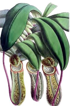 Pitcher Plant number7 Notecard Graduation Halloween thinking of You Handmade by RTFX on Etsy