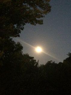 Luna llena entre los arboles