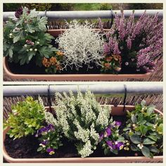 Herbstbepflanzung Window Boxes, Decoration, Pin Collection, Peonies, Oasis, Cool Designs, Seasons, Inspiration, Balcony
