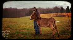 Daddy and Doodle ~Long-Ears Forever Farm 2015