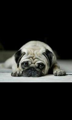 Too cute :3
