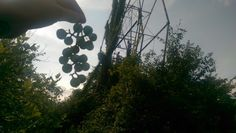Grapes growing on the ferris wheel