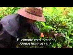ESTABLECIENDO BOSQUES COMESTIBLES, GEOFF LAWTON (Sub. en español) Aprende cómo establecer tu propio bosque de alimentos con el maestro en Permacultura Geoff Lawton. www.geofflawton.com