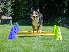 DogAgility by FitPAWS