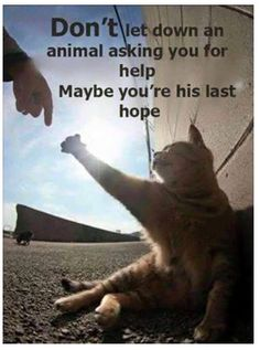 Animals are busy dying . us humans can be there last chance to survive ❤❤❤ Save Animals, Animals And Pets, Funny Animals, Funny Cats, Cat Quotes, Animal Quotes, Qoutes, Crazy Cat Lady, Crazy Cats