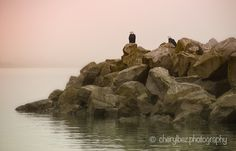 Eagles on the Rocks - A foggy morning provides the backdrop for this pair of Bald Eagles at the pier, White Rock, BC. Bald Eagles, Foggy Morning, The Rock, Monument Valley, Backdrops, Rocks, Landscape, World, Water