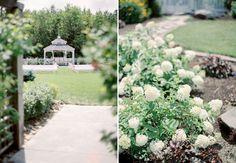 Mystical rose garden..perfect for romantic wedding.