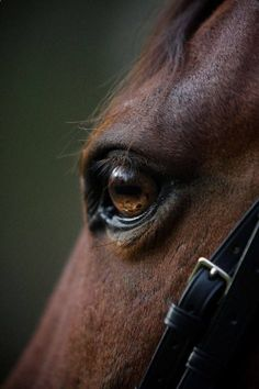 eye, nearly indescribable. And if I have to explain what I mean by that you just won't understand.equine eye, nearly indescribable. And if I have to explain what I mean by that you just won't understand. Breeders Cup Classic, Horse Print, Equine Art, Equine Photography, Horse Love, Zebras, Horseback Riding, Kentucky Derby, Beautiful Horses