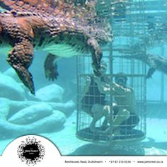 Crocodiles, Cheetah, Diving, Jr, Safari, Wildlife, Meet, Touch, Activities