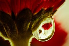 Adding Dew Drops to Enhance Macro Nature Photography Double Exposure Photography, Levitation Photography, Water Photography, Abstract Photography, Macro Photography, Flower Photography, Wedding Photography, Virtual Flowers, Experimental Photography