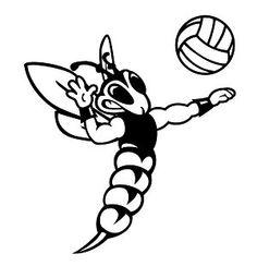 9 best everything hornet images hornet vespa bees Green Hornet 1973 hornet volleyball thehornet