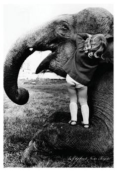 An Elephant Never Forgets By John Drysdale Sweet Face On This Listening
